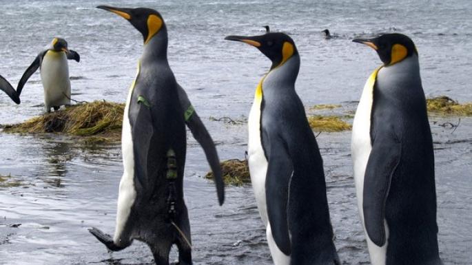 manchots en Antarctique