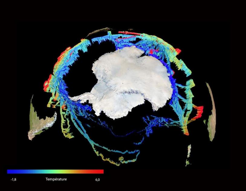 Plus de 20 000 profils de température et salinité ont été collectés par 85 éléphants de mer autour du continent antarctique entre 2004 et 2006 © CEBC/CNRS/SEaOS