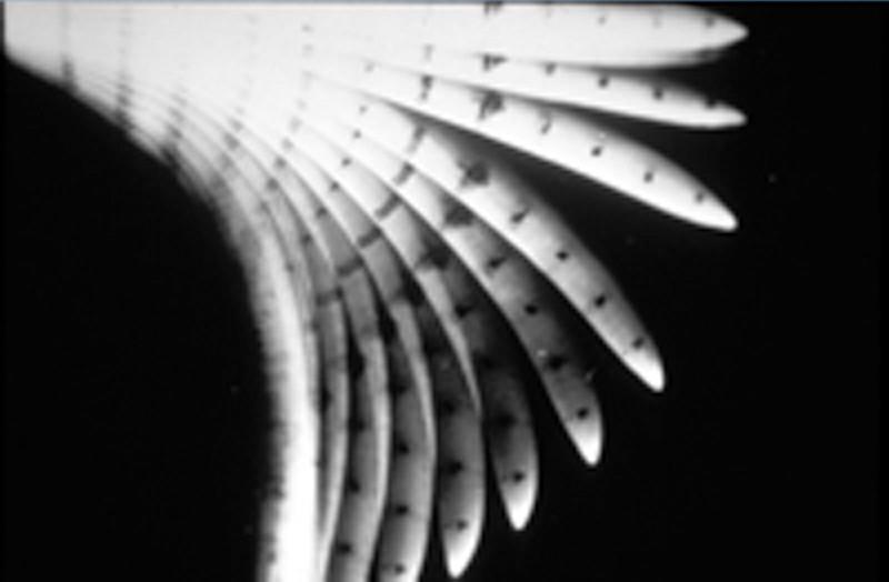 Une racine de maïs se réorientant sous l'effet de la gravité - © CNES/ESA